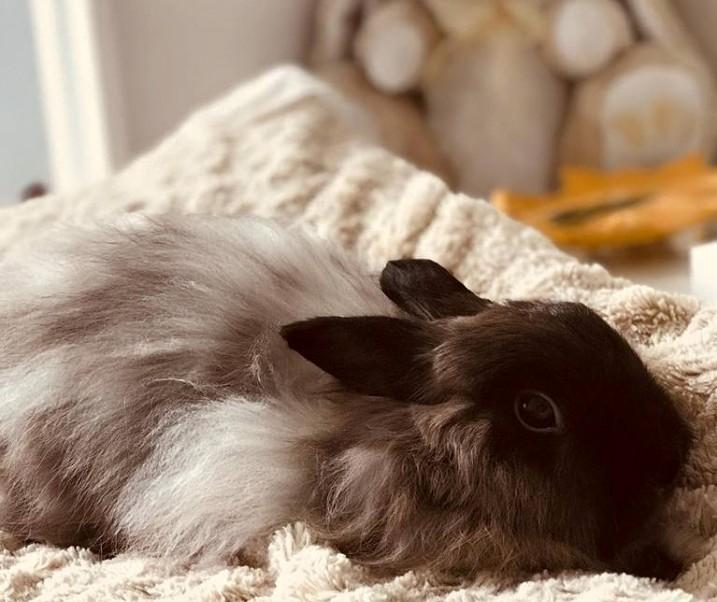 BunnyWeb